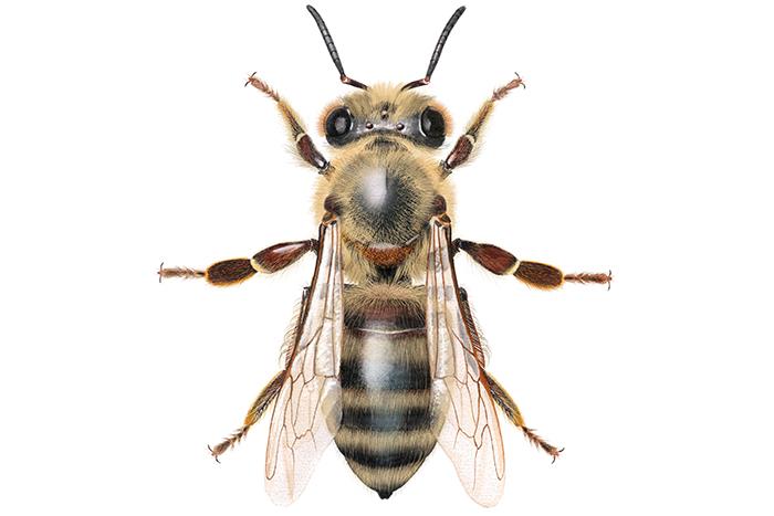40 prosent av amerikanske bier forsvant i fjor