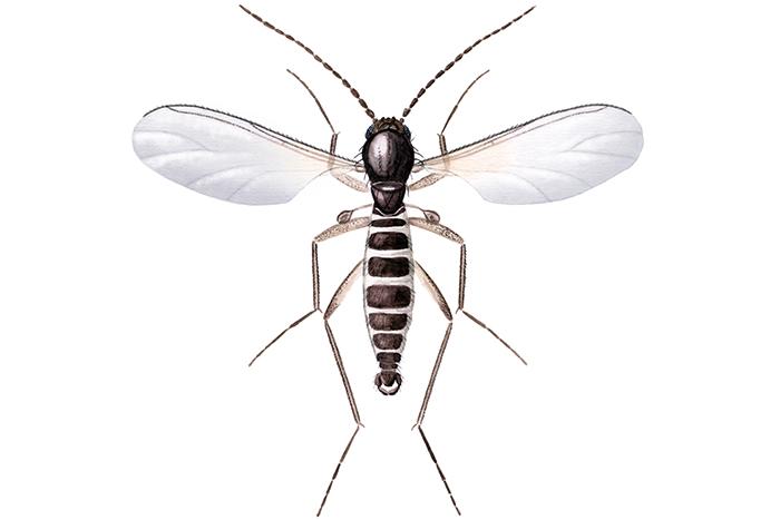 hvor mange bein har fluer