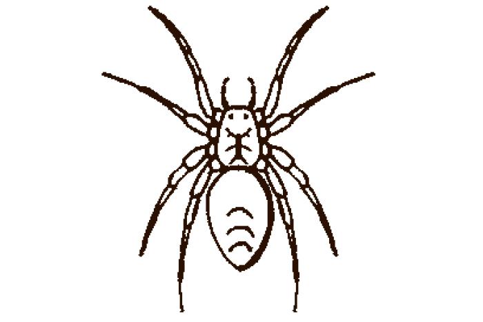 Edderkopper og midd, oversikt - FHI