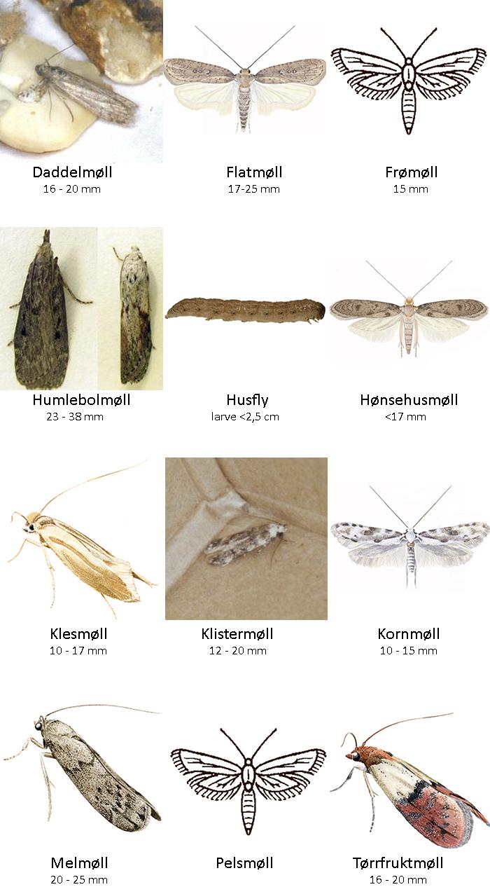 nettpub skadedyrveilederen moll og sommerfugler torrfruktmoll